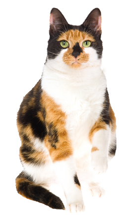 Calico cat christmas cards sloppy kiss cards why choose a calico cat to be the star of your ecard m4hsunfo