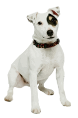 Jack russell terrier cards birthday thank you holidays more why choose a jack russell terrier to be the star of your ecard bookmarktalkfo Image collections