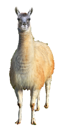 Why Choose A Llama To Be The Star Of Your Ecard