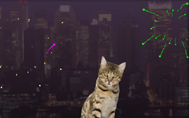 Happy New Year Its Time To Paaaw Ty Have A Cat Wish Your Kitty Crew
