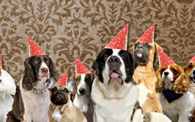Happy Birthday From All Of Us birthday ecard with dogs