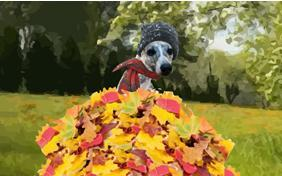 Warm Autumn Wishes dog ecard