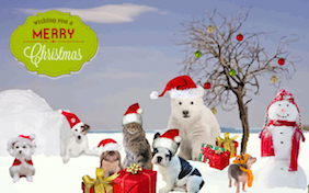 Winter holiday gathering pets dogs snow snowman christmas