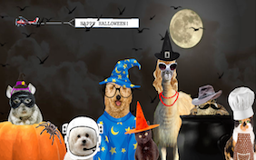 Build your own halloween ecard