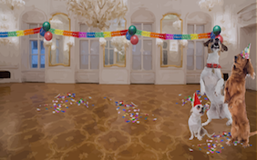 Party inside room celebration birthday decorations new year