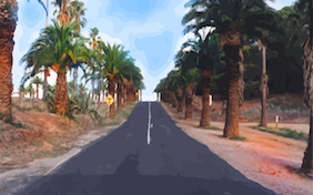 Road driving palm trees