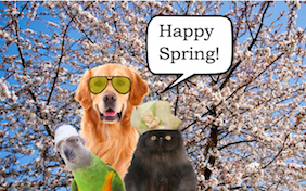 Build your own spring time ecard