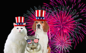Build your own July 4th ecard
