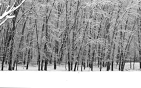 Winter snow trees holidays christmas