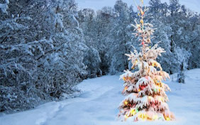 Winter christmas tree lights holidays snow