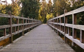 Wooden bridge outside nature