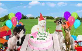Birthday Fun birthday ecard with cats