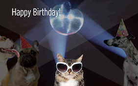 Birthday Bash birthday ecard with cats