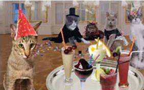 new years cocktail cat ecard