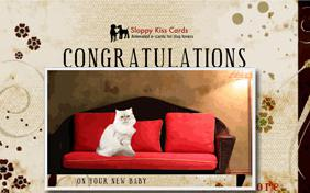 Congratulations On Your Baby: Single Parent ecard with cats