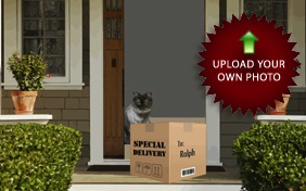 Special Delivery cat ecard