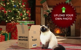 Christmas Delivery photo upload cat ecard