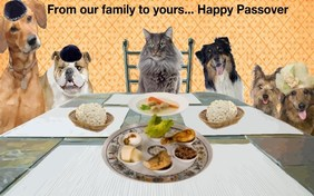 Happy Passover cat ecard