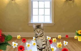 One Of A Kind: Mother's Day ecard with cats