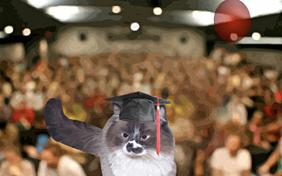 Graduation ecard with cats