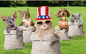Memorial Day Picnic cat ecard
