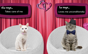 Is It Love Cat Ecard