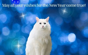 cat happy new year cards
