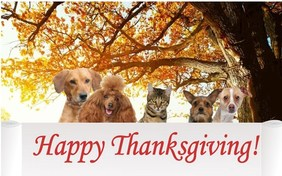 cat thanksgiving cards sloppy kiss cards