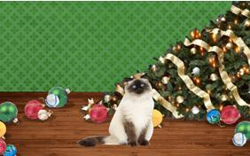 Naughty or Nice cat Christmas ecard