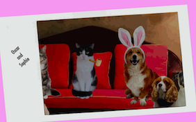 Easter Wishes ecard with cats