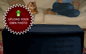 Losing a Friend Sympathy Cat Ecard: Upload Your Own Photo ecard for cats