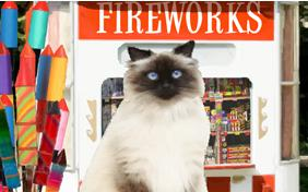 Happy New Year Four Ways ecard with cats