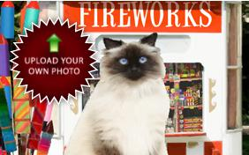 Happy New Year Four Ways photo upload ecard with cats