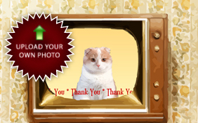Thank You Four Ways photo upload cat ecard