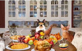 Thanksgiving Dinner cat ecard