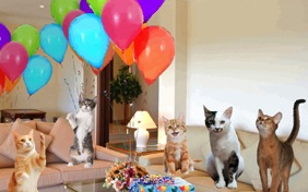 Surprise Party cat ecard