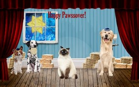 Matzo Love Passover cat ecard