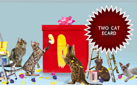 Congratulations Surprise ecard starring two cats