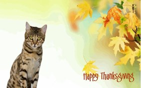 Being Thankful ecard with cats