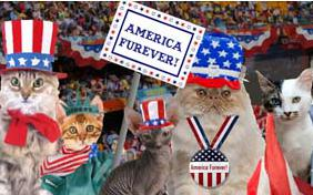 America Furever July Fourth cat ecard