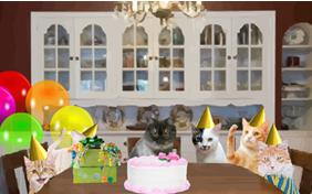 Birthday Celebration cat ecard