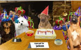 Cheers to You! birthday ecard with dogs