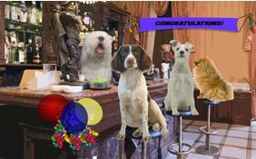 Congratulations funny dog - photo#44