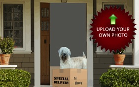 Special Delivery dog ecard