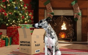 Christmas Delivery photo upload dog ecard