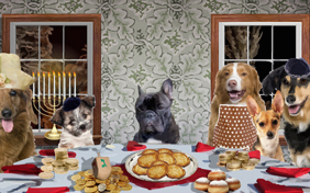 A Family Hanukkah: Upload Your Photo ecard with dogs