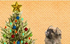Getting Ready for Christmas ecard with dogs