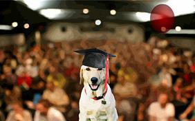Graduation ecard with dogs