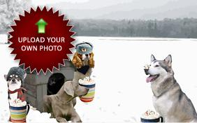 Holiday Activities For Dogs: Upload Your Photo ecard with dogs