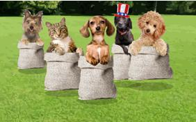 July 4th Fun ecard with dogs